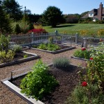 flower garden beds with irrigation system