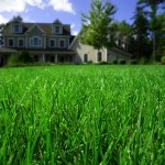 close up of grass in front of home